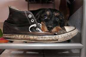 Converse All Star High Tops M9160 von Hund zerfleischt!