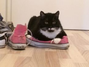 Converse Chuck Taylor All Star M9006 Pink - loved by Cats